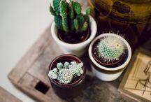 ..grow.. / bringing nature indoors  / by Janina Curtis