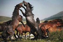 Horses 3. / by Laurie Fore