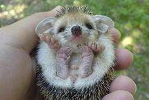 Oh So Cute! / by Sarah Marie