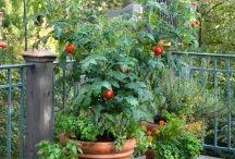 Garden fun / by Julia Stevens