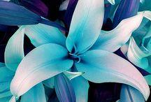 Flowers I'd probably kill / by Amanda Gershon