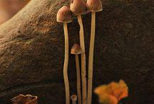 champignons / by Christine Noiseux