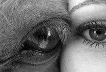 Horses / by Anneke Morel
