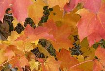 Getting into Fall / by Woodhouse Timber Frame