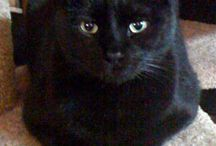 I thought I saw a putty tat! / My love for black cats / by Sherice James