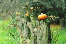 I love fall! / by Meredith Bustillo