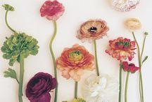 Colour / by Kristie Hughes
