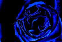 Blue Beauty / by Cynthia Christensen