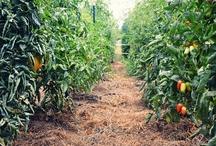 Farms / by Backyard Industry