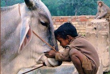 Kids and Animals / by Terry Ivan