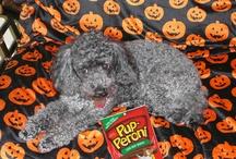 Holi-Dog-Days / by Pup-Peroni®