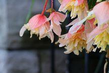 Plants / by Lisa Bell Pierce