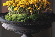 Bloomin' / by Patti Kommel Homework Interiors,LLC