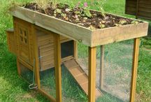 Chicken Coops / by National Home Gardening Club