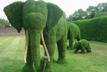 Topiary...the way you cut it / by Jennifer Mitchell