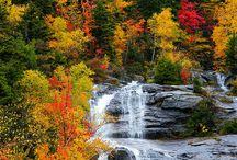 Fall Favorites / Fall's beauty and bounty / by Sandy Hazlewood Frizzell