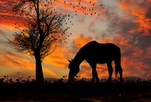Horses / by Pascale