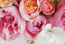 Floral Design / I get lost in the design and beauty of flowers and arrangements. / by Kelley
