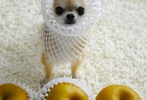 chihuahua favorites / by Shawna Smith