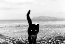cats / by Diana N.