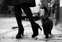 Kitten / by lucy Lunchbox