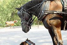 Horses / by Katelin Wareham
