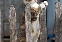 Cats / by Holly Cuciz