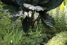 Cool plants for yard / by Leslie Miller Mitchell