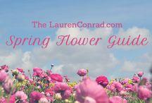 Flowers by Season / by Owens Flower Shop