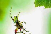 Great bugs / by Joan Morris