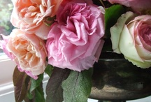 Roses / Delicate. Fragrant. Timeless. Romantic. Roses. / by Kay
