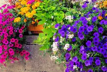 gardening / by Tricia Carr