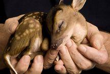 Animal Love / by Jennifer Mary
