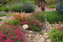 Landscaping  / by Erin Bourne