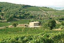 Brunello  / by Angelini Wine
