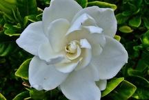 garden wishlist / by michaele greenwald