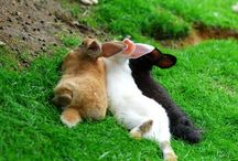 My animal pals / by Christy Hammock