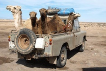 Random Landy Pics / A few of our favourite random pics of Land Rovers / by Land Rover Owner www.lro.com