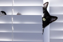 Gats-cats-gatos / by Rosalia Casas H.