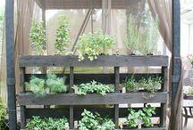 gardening / by kathy harris