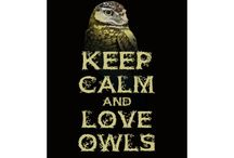 My owl obsession / I'd like to think as my spirit animal - Nocturnal bird of prey / by Distinctly Donald