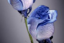 Flowers / by Sherry Bryant