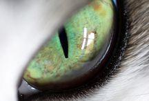 Eyes / by Courtney Farnworth