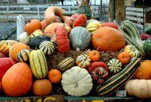 It's Fall Y'all! / by Tara Curtis