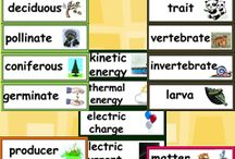 Fourth Grade Science / by Vicki Hoffman