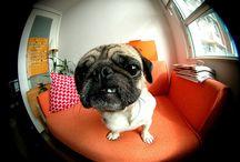 Pets 'n' stuff / by Lorcheenas Boutique