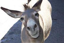 donkey ... I love you / by Roberta Descalzo