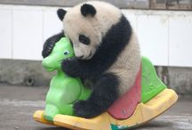 Pandas ❤️❤️ / by Selena Robles