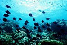 Underwater Vistas / by Marty Israel