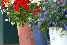 Flower Arrangements / by Kim Graf